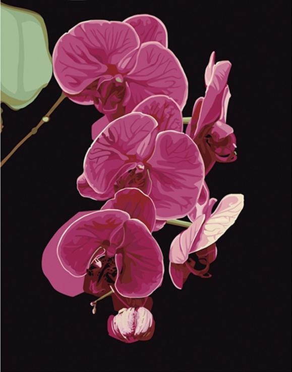 «Утонченность орхидеи»Hobbart<br><br><br>Артикул: hb4050065<br>Основа: Холст<br>Сложность: средние<br>Размер: 40x50 см<br>Количество цветов: 21<br>Техника рисования: Без смешивания красок