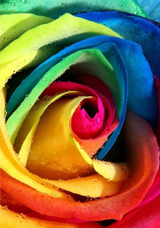 Стразы «Радужная роза»Алмазная вышивка Гранни<br>Друзья, обратите внимание, цветовая гамма сюжета на фотографии, которую вы видите на сайте, иногда может иметь незначительные отличия от цветовой гаммы страз в наборе<br><br>Артикул: AG4615<br>Основа: Холст без подрамника<br>Сложность: средние<br>Размер: 19x27 см<br>Выкладка: Полная<br>Количество цветов: 30<br>Тип страз: Квадратные
