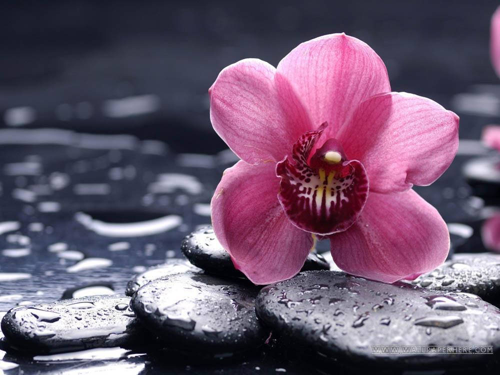 Алмазная вышивка «Орхидея Ванда»Алмазная вышивка Гранни<br><br><br>Артикул: AG5848<br>Основа: Холст без подрамника<br>Сложность: средние<br>Размер: 38x27 см<br>Выкладка: Полная<br>Количество цветов: 28<br>Тип страз: Квадратные