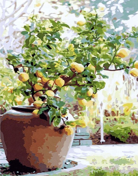 «Лимонное дерево»Раскраски по номерам Paintboy (Original)<br><br><br>Артикул: GX7551_R<br>Основа: Холст<br>Сложность: средние<br>Размер: 40x50 см<br>Количество цветов: 24<br>Техника рисования: Без смешивания красок