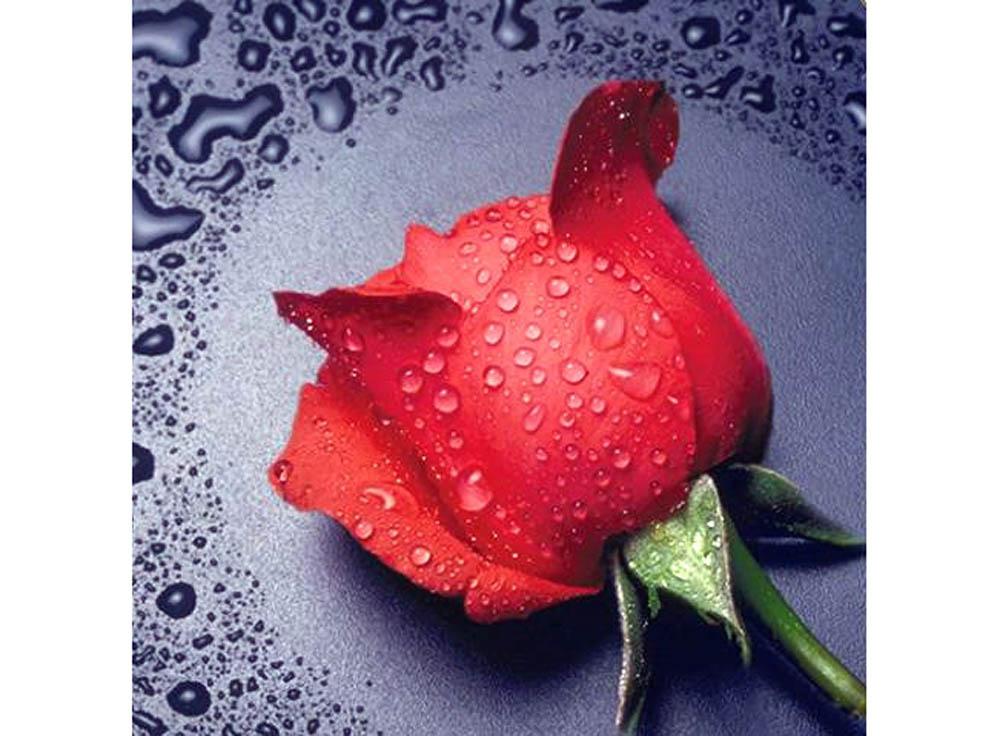 Купить Алмазная вышивка «Красная роза», Алмазная Живопись, Россия