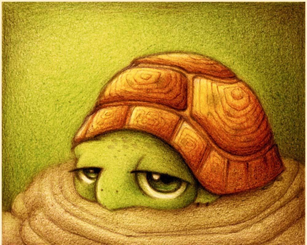 Животные рисунки черепаха