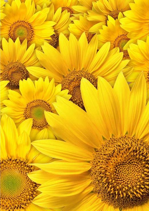Стразы «Желтые цветы»Алмазная вышивка Гранни<br><br><br>Артикул: AG4622<br>Основа: Холст без подрамника<br>Сложность: средние<br>Размер: 27x38<br>Выкладка: Полная<br>Количество цветов: 8<br>Тип страз: Квадратные