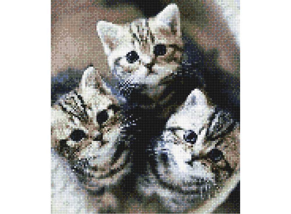 Алмазная вышивка «Очаровательные котята»Алмазная вышивка<br><br>