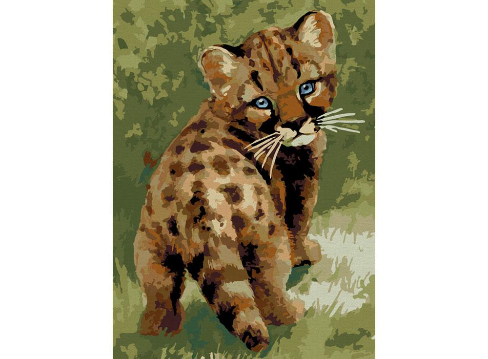 «Детеныш леопарда»Раскраски по номерам Color Kit<br><br><br>Артикул: CE008<br>Основа: Холст<br>Сложность: сложные<br>Размер: 30x40 см<br>Количество цветов: 25<br>Техника рисования: Без смешивания красок