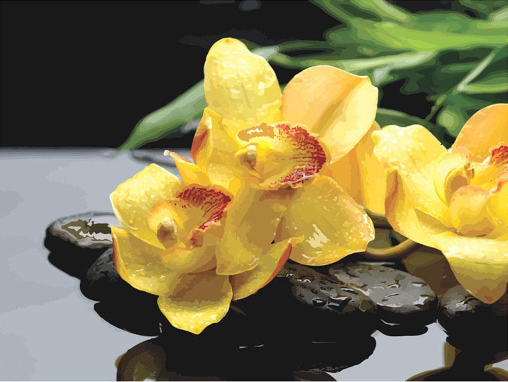 «Жёлтые орхидеи»Раскраски по номерам Color Kit<br><br><br>Артикул: CG605<br>Основа: Холст<br>Сложность: средние<br>Размер: 40x50 см<br>Количество цветов: 27<br>Техника рисования: Без смешивания красок