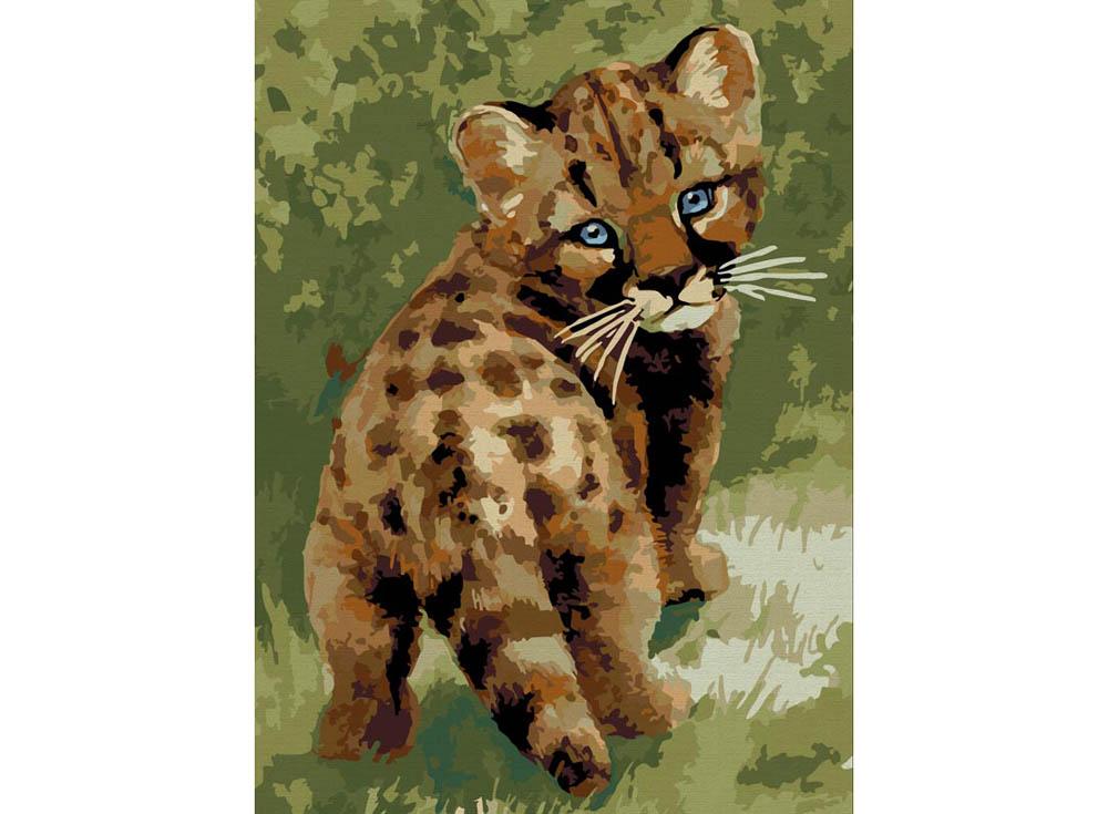 «Детеныш леопарда»Картины по номерам Белоснежка<br><br><br>Артикул: 008-CE<br>Основа: Холст<br>Сложность: средние<br>Размер: 30x40<br>Количество цветов: 20<br>Техника рисования: Без смешивания красок