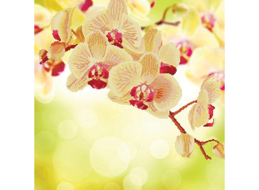Алмазная вышивка «Нежная орхидея»Алмазная вышивка Color Kit (Колор Кит)<br><br><br>Артикул: 80172<br>Основа: Холст без подрамника<br>Сложность: сложные<br>Размер: 50x50 см<br>Выкладка: Частичная<br>Количество цветов: 14<br>Тип страз: Круглые непрозрачные (акриловые)