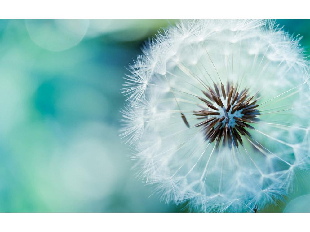 Алмазная вышивка «Одуванчик»Яркие Грани<br><br><br>Артикул: DS011<br>Основа: Холст без подрамника<br>Сложность: средние<br>Размер: 50x31 см<br>Выкладка: Полная<br>Количество цветов: 44<br>Тип страз: Квадратные