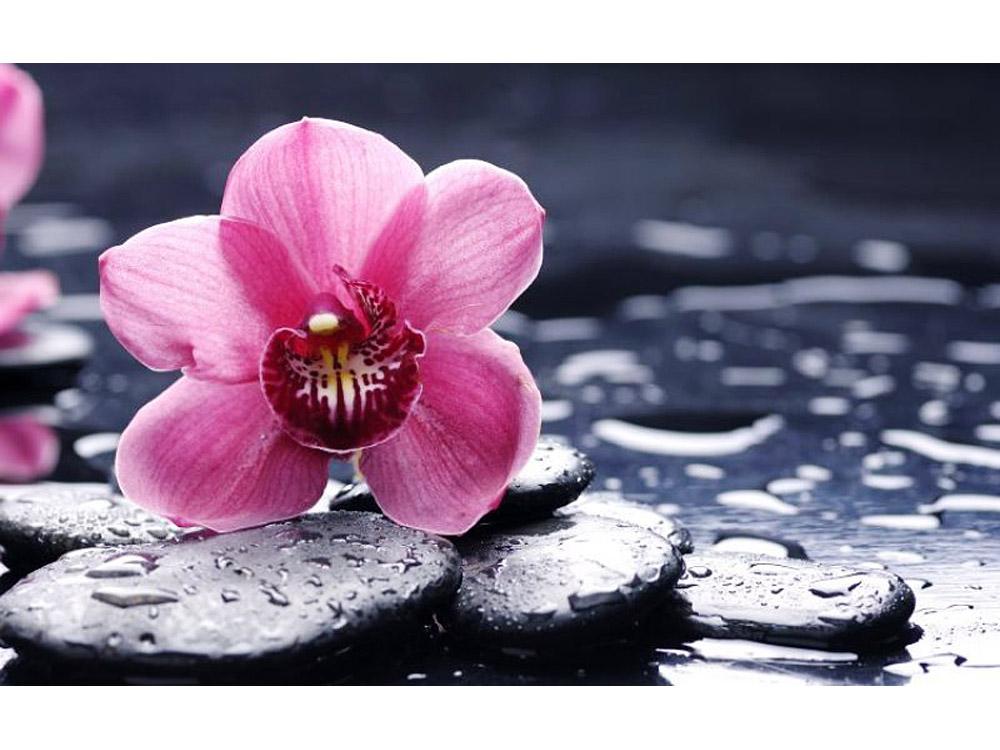 Стразы «Орхидея и камни»Яркие Грани<br><br><br>Артикул: DS015<br>Основа: Холст без подрамника<br>Сложность: средние<br>Размер: 50x31 см<br>Выкладка: Полная<br>Количество цветов: 51<br>Тип страз: Квадратные