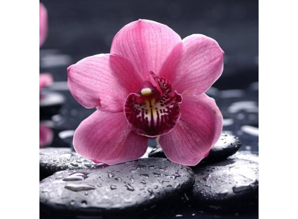 Алмазная вышивка «Орхидея»Яркие Грани<br><br><br>Артикул: DS018<br>Основа: Холст без подрамника<br>Сложность: средние<br>Размер: 20x20 см<br>Выкладка: Полная<br>Количество цветов: 32<br>Тип страз: Квадратные