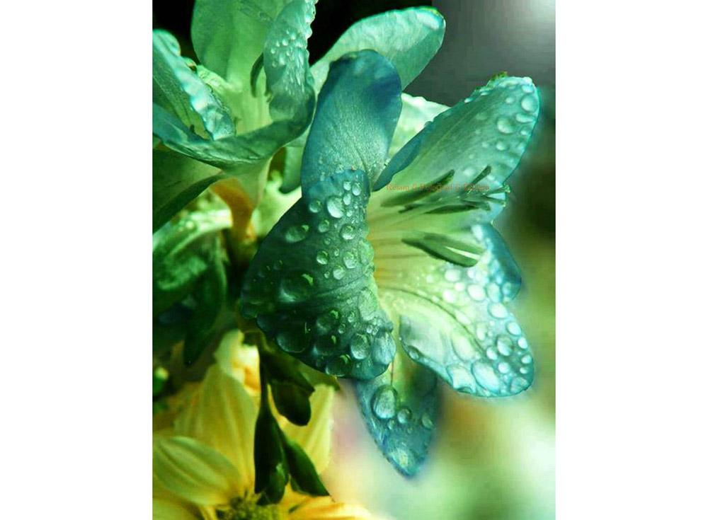 Алмазная вышивка «Лилия»Яркие Грани<br><br><br>Артикул: DS023<br>Основа: Холст без подрамника<br>Сложность: средние<br>Размер: 38x50 см<br>Выкладка: Полная<br>Количество цветов: 53<br>Тип страз: Квадратные