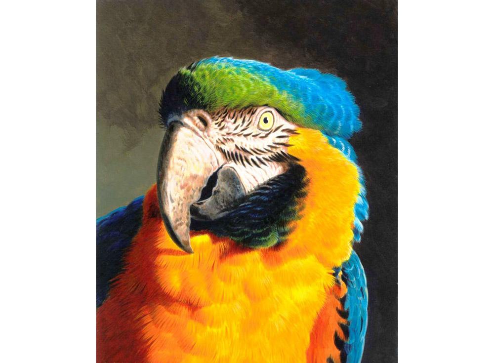 Алмазная вышивка «Попугай»