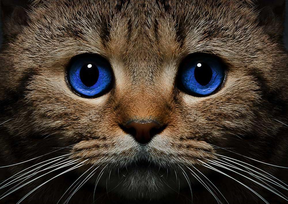 Стразы «Синеглазый кот»Алмазная вышивка Гранни<br><br><br>Артикул: AG497<br>Основа: Холст без подрамника<br>Сложность: средние<br>Размер: 27x38 см<br>Выкладка: Полная<br>Количество цветов: 25<br>Тип страз: Квадратные