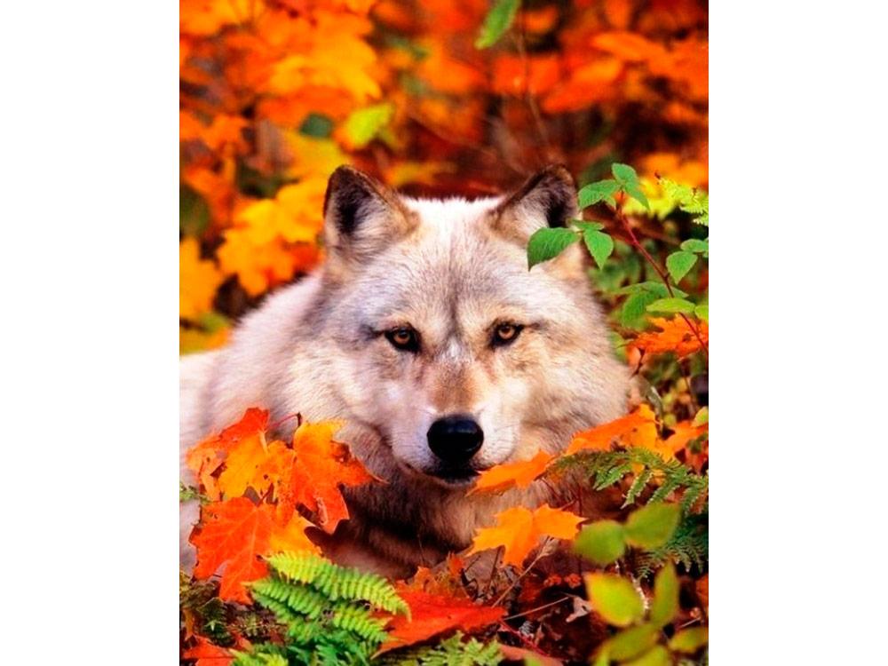 Алмазная вышивка «Волк»Алмазная вышивка<br><br>