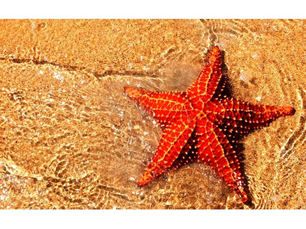 Алмазная вышивка «Морская звезда»Яркие Грани<br><br><br>Артикул: DS033<br>Основа: Холст без подрамника<br>Сложность: средние<br>Размер: 50x32 см<br>Выкладка: Полная<br>Количество цветов: 43<br>Тип страз: Квадратные