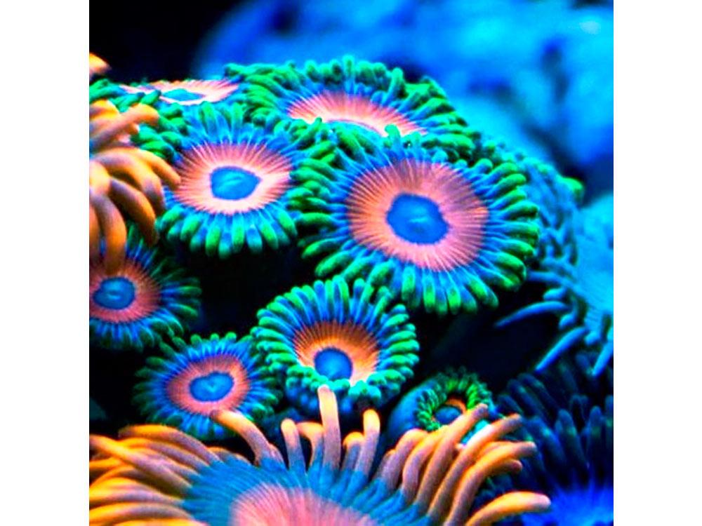 Стразы «Коралл»Яркие Грани<br><br><br>Артикул: DS038<br>Основа: Холст без подрамника<br>Сложность: средние<br>Размер: 50x50 см<br>Выкладка: Полная<br>Количество цветов: 54<br>Тип страз: Квадратные