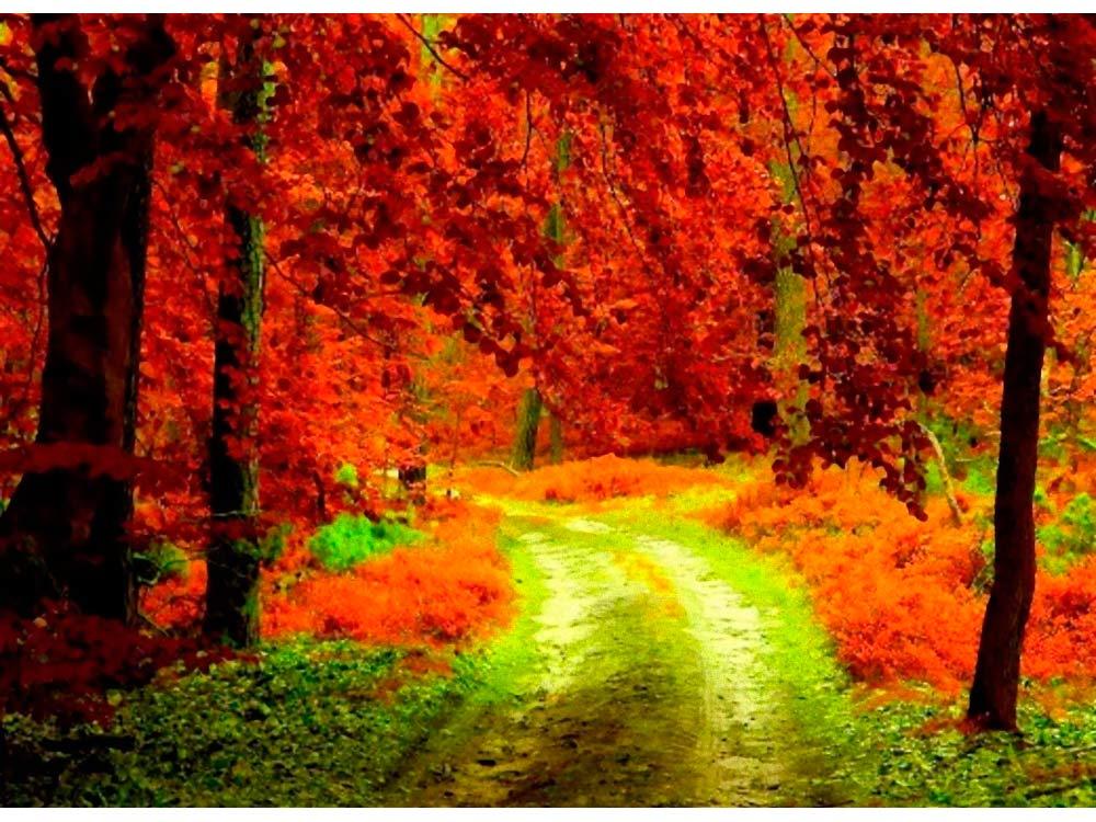 Алмазная вышивка «Осенний лес»Яркие Грани<br><br><br>Артикул: DS118<br>Основа: Холст без подрамника<br>Сложность: средние<br>Размер: 50x37 см<br>Выкладка: Полная<br>Количество цветов: 49<br>Тип страз: Квадратные