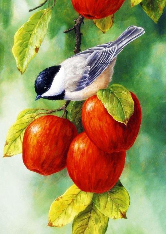 Стразы «Синица во время сбора яблок» Кристы ФорестАлмазная вышивка Гранни<br><br><br>Артикул: AG1046<br>Основа: Холст без подрамника<br>Сложность: средние<br>Размер: 27x38 см<br>Выкладка: Полная<br>Количество цветов: 33<br>Тип страз: Квадратные