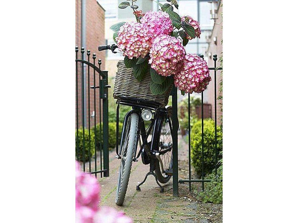 Стразы «Велосипед»Яркие Грани<br><br><br>Артикул: DS546<br>Основа: Холст без подрамника<br>Сложность: очень сложные<br>Размер: 50x74<br>Выкладка: Полная<br>Количество цветов: 58<br>Тип страз: Квадратные