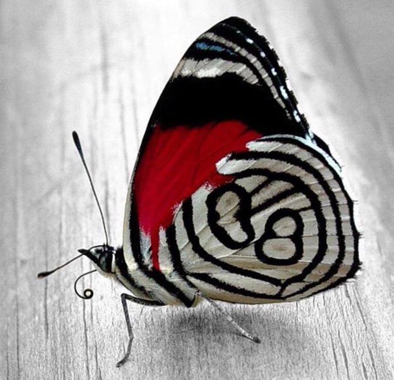 Алмазная вышивка «Бабочка 1»Алмазная вышивка<br><br>