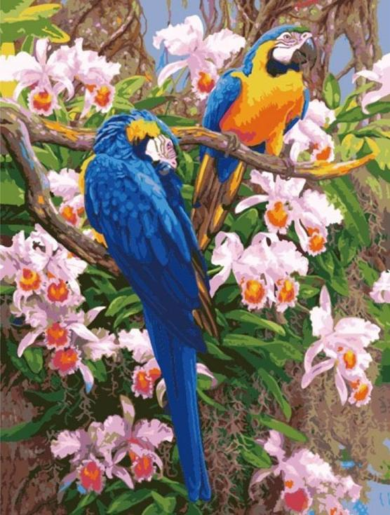 Картина по номерам «Попугаи»Цветной (Premium)<br>Симпатичная пара ярких попугаев составит дружескую компанию любой картине с красочным сюжетом. Нежные цветы и насыщенный цвет экзотических птиц украсит интерьер и станет картиной-акцентом, привлекающей к себе внимание. А так как попугаи традиционно символ...<br><br>Артикул: MMC045_Z<br>Основа: Холст<br>Сложность: очень сложные<br>Размер: 50x65 см<br>Количество цветов: 24<br>Техника рисования: Без смешивания красок