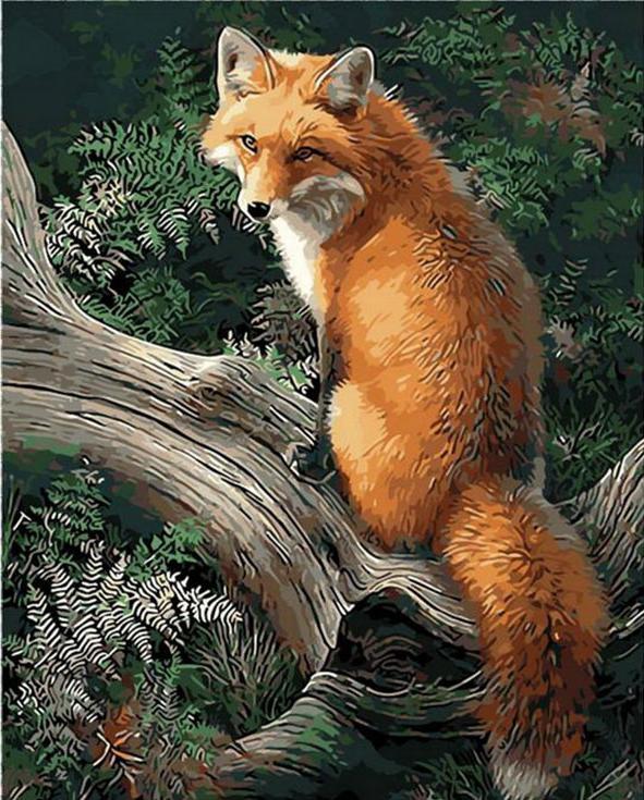 Картина по номерам «Лиса в лесу» Джонни Джонсон-ГодсиMenglei (Premium)<br><br><br>Артикул: MG920<br>Основа: Холст<br>Сложность: сложные<br>Размер: 40x50 см<br>Количество цветов: 24<br>Техника рисования: Без смешивания красок