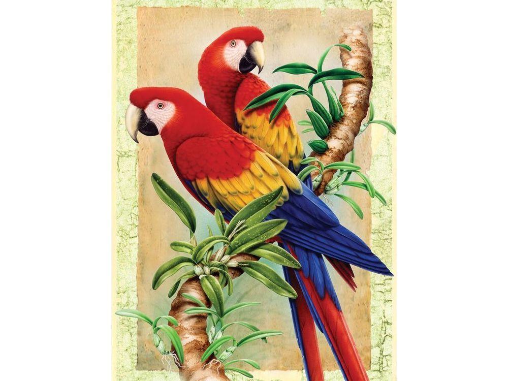 Купить Картина по номерам «Бамбук и попугаи», Royal&Langnickel, Великобритания