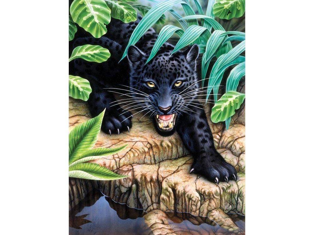 Пантера раскраска по номерам