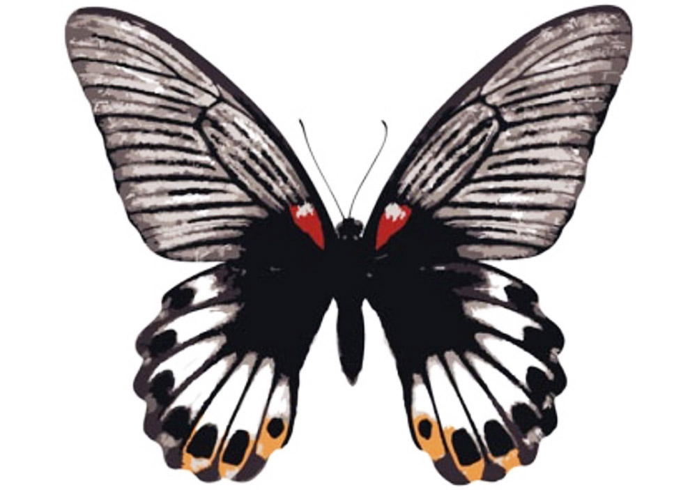 Картина по номерам «Бабочка-парусник»Цветной (Premium)<br><br><br>Артикул: MC1002_Z<br>Основа: Холст<br>Сложность: легкие<br>Размер: 20x30 см<br>Количество цветов: 8<br>Техника рисования: Без смешивания красок