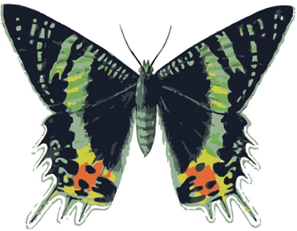 «Бабочка Урания»Цветной (Premium)<br><br><br>Артикул: MC1003_Z<br>Основа: Холст<br>Сложность: легкие<br>Размер: 20x30 см<br>Количество цветов: 8<br>Техника рисования: Без смешивания красок