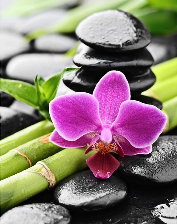 Стразы «Орхидея и бамбук»Алмазная вышивка Гранни<br><br><br>Артикул: AG4659<br>Основа: Холст без подрамника<br>Сложность: сложные<br>Размер: 38x48 см<br>Выкладка: Полная<br>Количество цветов: 39<br>Тип страз: Квадратные