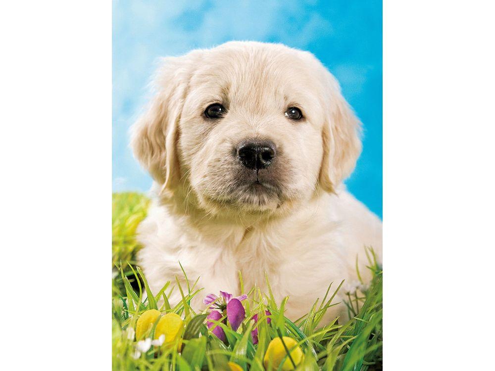 Пазлы «Милый щенок»