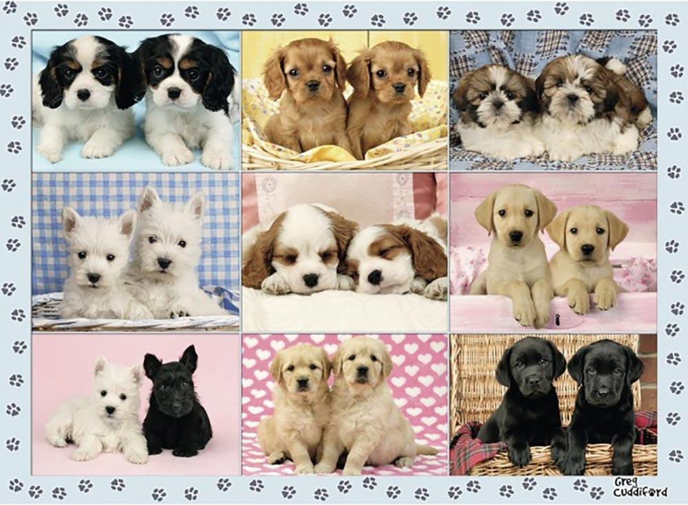Пазлы «Прелестные щенки»