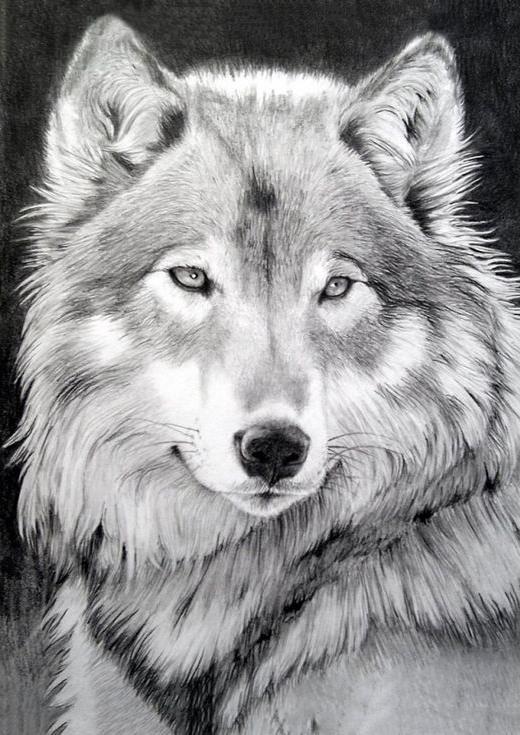Стразы «Серый волк»Алмазная вышивка Гранни<br><br><br>Артикул: Ag545<br>Основа: Холст без подрамника<br>Сложность: средние<br>Размер: 27x38 см<br>Выкладка: Полная<br>Количество цветов: 12<br>Тип страз: Квадратные