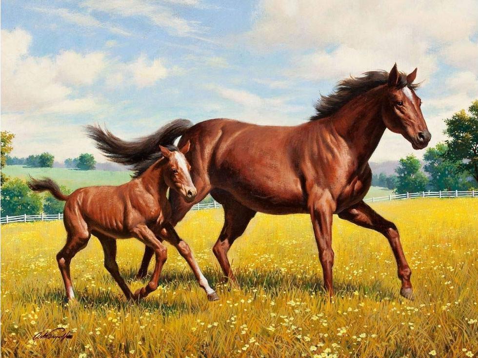 Стразы «Донские лошади»Алмазная вышивка Гранни<br><br><br>Артикул: Ag661<br>Основа: Холст без подрамника<br>Сложность: сложные<br>Размер: 38x48 см<br>Выкладка: Полная<br>Количество цветов: 37<br>Тип страз: Квадратные