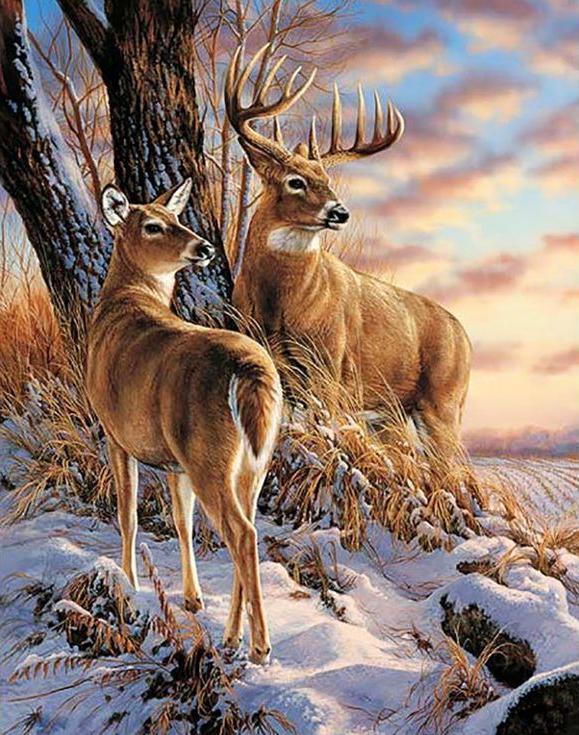 Алмазная вышивка «В зимнем лесу»Алмазная вышивка Гранни<br><br><br>Артикул: Ag668<br>Основа: Холст без подрамника<br>Сложность: сложные<br>Размер: 38x48 см<br>Выкладка: Полная<br>Количество цветов: 35<br>Тип страз: Квадратные