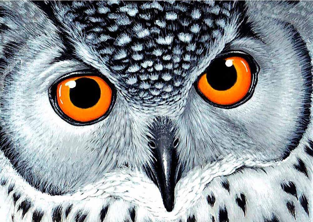 Стразы «Взгляд совы»Алмазная вышивка Гранни<br><br><br>Артикул: Ag860<br>Основа: Холст без подрамника<br>Сложность: средние<br>Размер: 27x38 см<br>Выкладка: Полная<br>Количество цветов: 20<br>Тип страз: Квадратные
