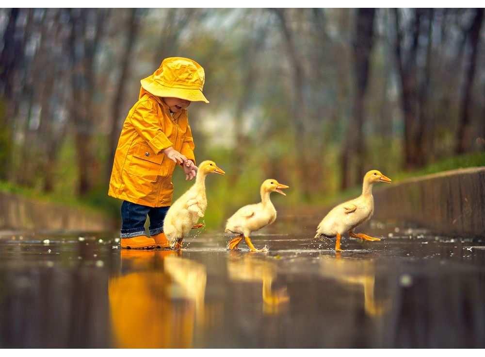 Castorland Пазлы «Дождливый день» B52264