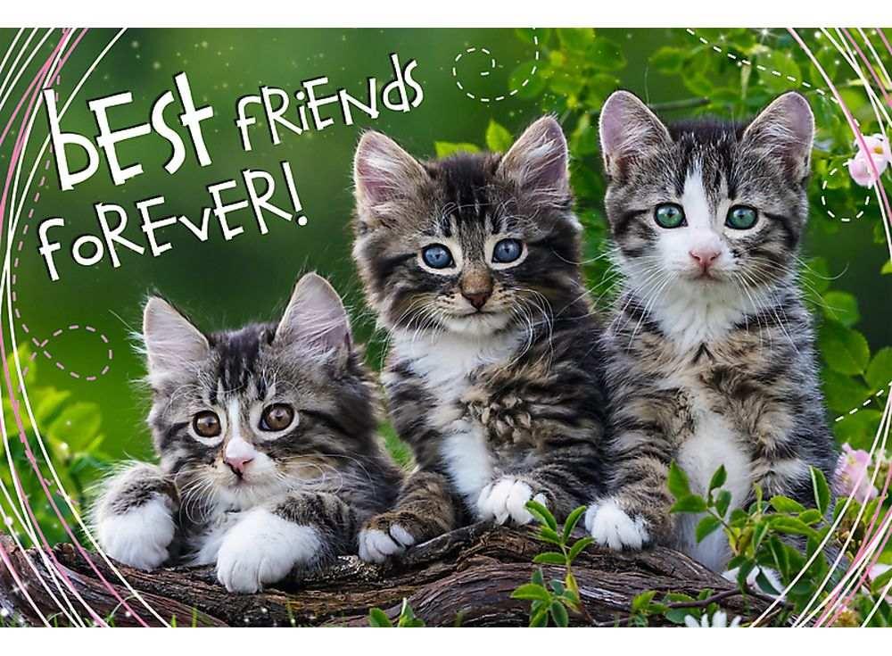Пазлы «Дружные котята»Trefl<br><br><br>Артикул: 13215<br>Размер: 60x40 см