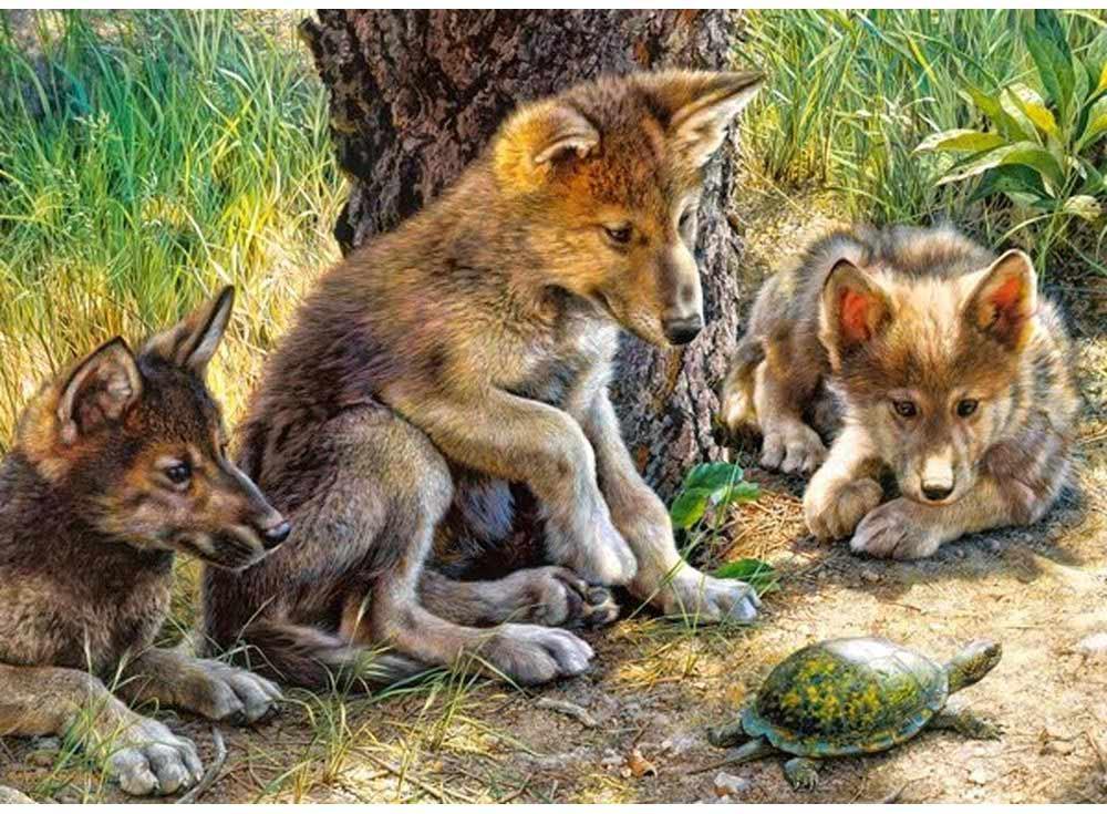 Пазлы «Волчата и черепаха»Пазлы от производителя Castorland<br><br><br>Артикул: B27385<br>Размер: 32x23 см
