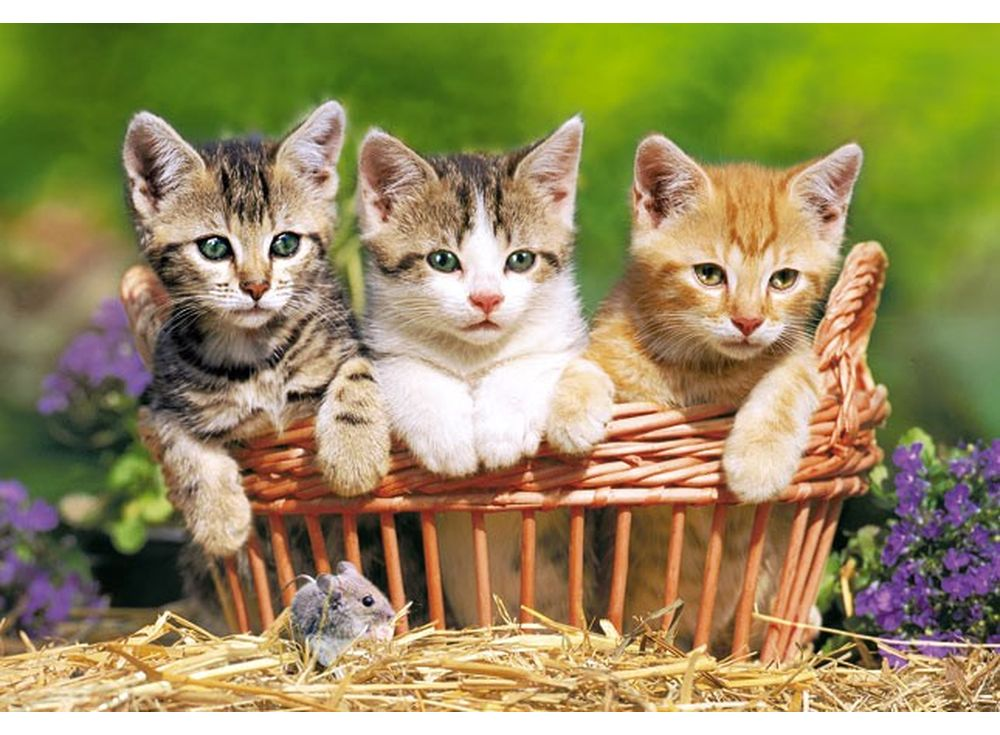 Пазлы «Три котёнка»Пазлы от производителя Castorland<br><br><br>Артикул: B51168<br>Размер: 47x33 см