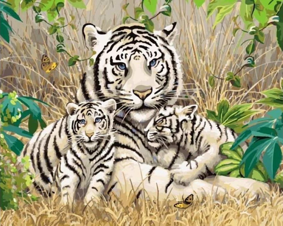 Картина по номерам «Белые тигры»Раскраски по номерам Paintboy (Original)<br><br><br>Артикул: GX7810_R<br>Основа: Холст<br>Сложность: средние<br>Размер: 40x50 см<br>Количество цветов: 27<br>Техника рисования: Без смешивания красок