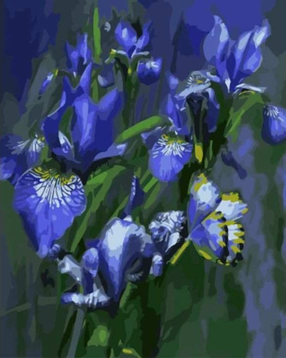 Картина по номерам «Ирисы» Кэрол КаваларисPaintboy (Premium)<br><br><br>Артикул: GX8236<br>Основа: Холст<br>Сложность: сложные<br>Размер: 40x50 см<br>Количество цветов: 25<br>Техника рисования: Без смешивания красок