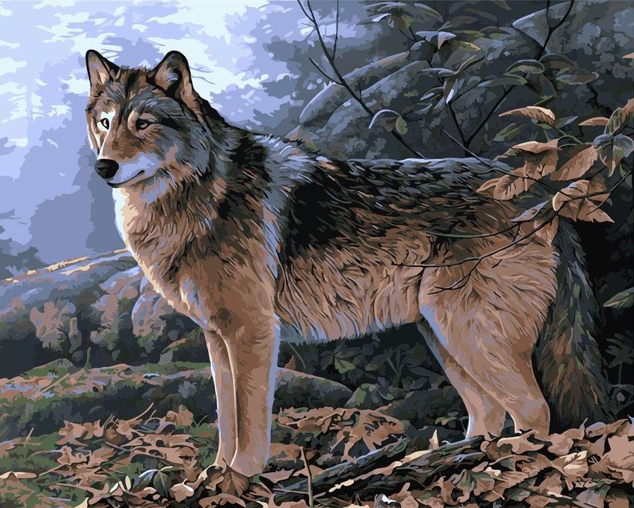 «Волк в лесу»Menglei (Premium)<br><br><br>Артикул: MG733<br>Основа: Холст<br>Сложность: сложные<br>Размер: 40x50 см<br>Количество цветов: 25<br>Техника рисования: Без смешивания красок