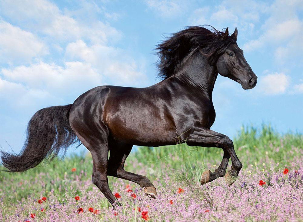Пазлы «Прекрасная лошадь»Ravensburger<br><br><br>Артикул: 12803<br>Размер: 49x36 см