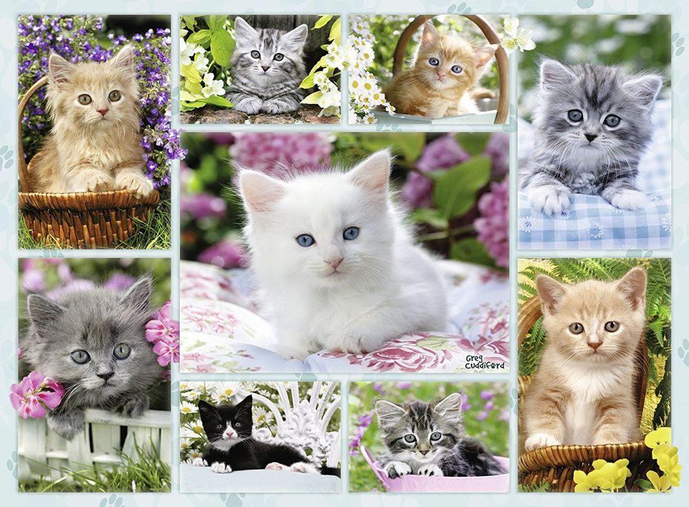Пазлы «Галерея котят»Ravensburger<br><br><br>Артикул: 14196<br>Размер: 49x36 см