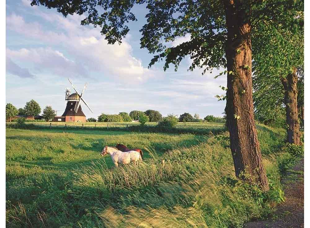 Пазлы «Сельский пейзаж»Ravensburger<br><br><br>Артикул: 16635<br>Размер: 98x75 см