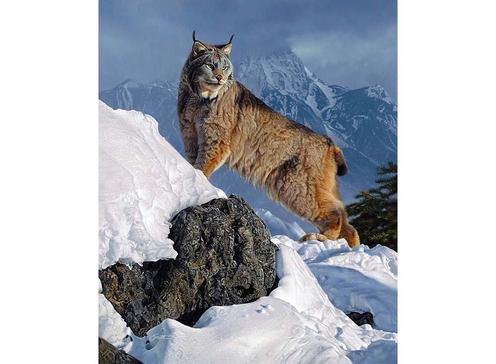 Пазлы «Рысь в горах»Пазлы от производителя Castorland<br><br><br>Артикул: C103560<br>Размер: 68x47 см