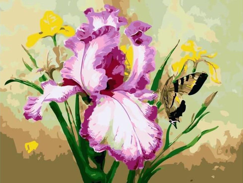 «Ирис и бабочка»Цветной (Premium)<br><br><br>Артикул: ME1028_Z<br>Основа: Холст<br>Сложность: сложные<br>Размер: 30x40 см<br>Количество цветов: 25<br>Техника рисования: Без смешивания красок